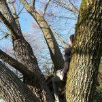 Belinda Steinle auf Baum liegend blauer Himmel